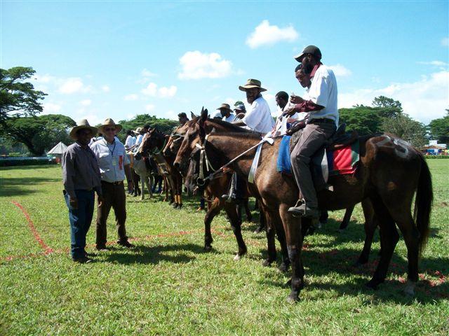 cowboy-winners-jumping